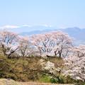 Photos: 勝沼甚六桜と南アルプス