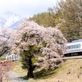 八ヶ岳と桜とE353系特急スーパーあずさ号