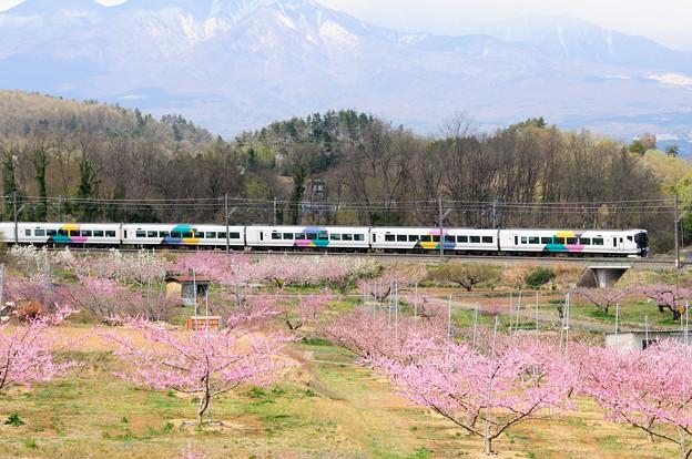 桃の花咲く新府桃源郷を行くE257系特急あずさ号