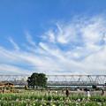 写真: 青空と雲と電車