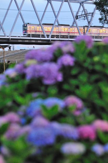 紫陽花とイブニングライナー