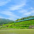 写真: 113系電車