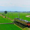 緑の絨毯を行く115系電車