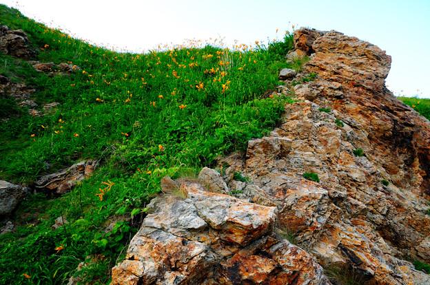 写真: 崖に咲く黄色い花