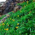 Photos: 崖に咲く
