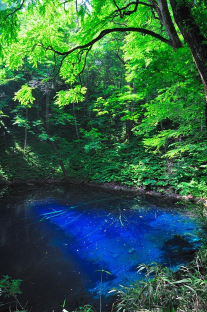 新緑の青池