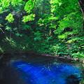 写真: 新緑の青池
