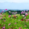Photos: 黒姫高原
