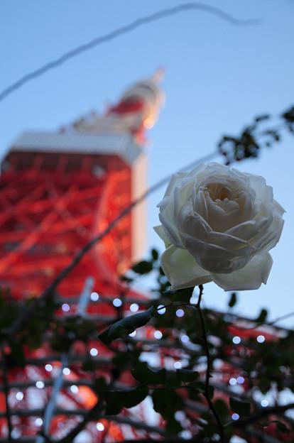 秋薔薇と東京タワー