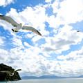 写真: この空を飛べたら