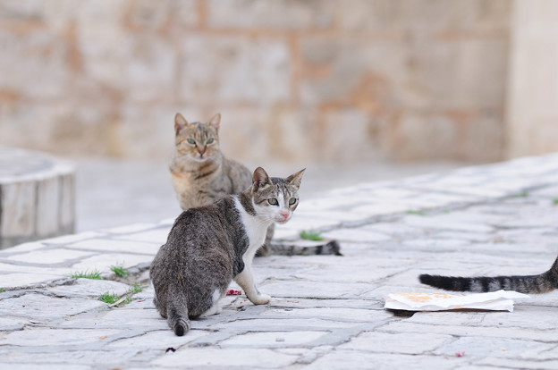 Photos: Sousse