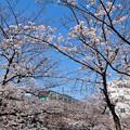 咲き始めた桜と東京メトロ千代田線16000系電車