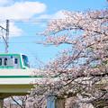七分咲の桜と東京メトロ千代田線05系電車