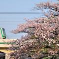満開の桜と東京メトロ千代田線05系電車