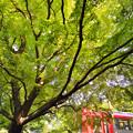 Photos: 緑の天井