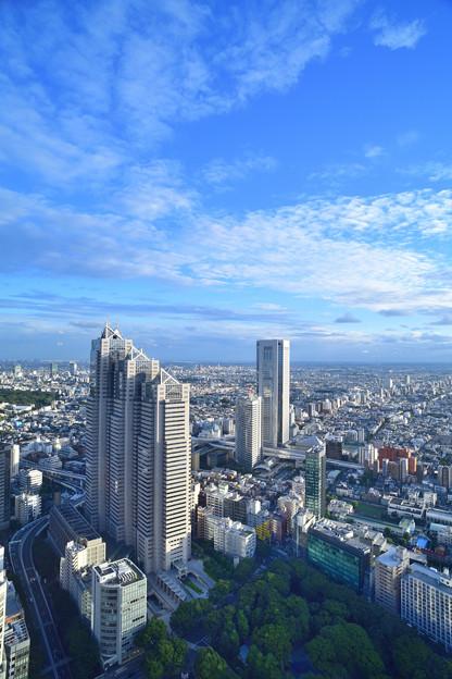 パークハイアットホテルと新宿中央公園
