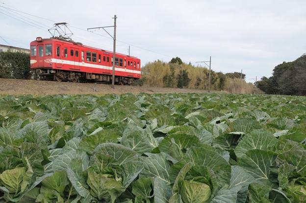 キャベツ畑と銚子電鉄