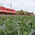 Photos: キャベツ畑と銚子電鉄