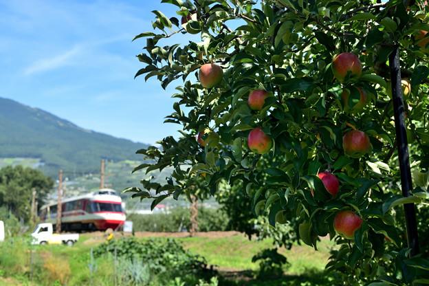 ゆけむり号がリンゴ畑を行く