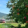 Photos: ゆけむり号がリンゴ畑を行く