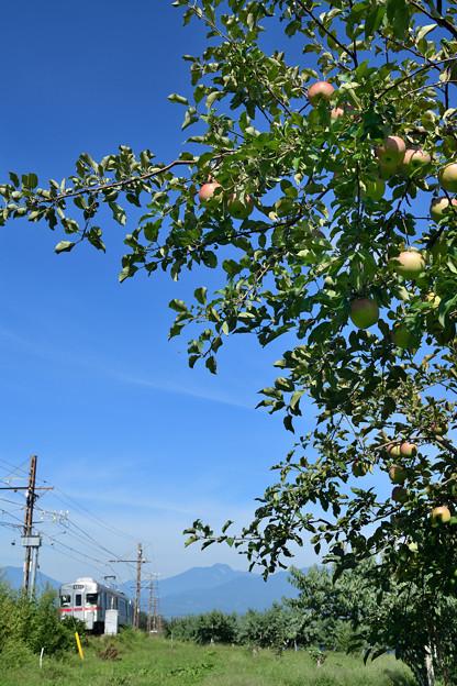 リンゴ畑を見ながら