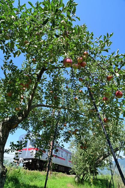 リンゴ畑を行く3500系電車