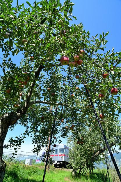 青空とリンゴの木とローカル電車
