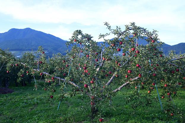 赤く実った果実
