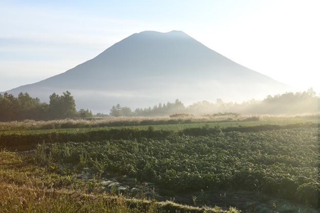朝霧と羊蹄山