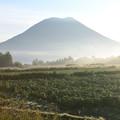 Photos: 朝霧と羊蹄山