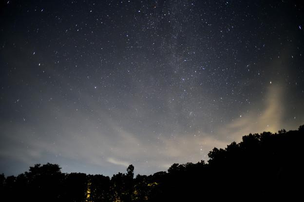 漆黒の森を照らす星座たち