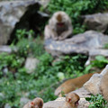 Photos: 小猿