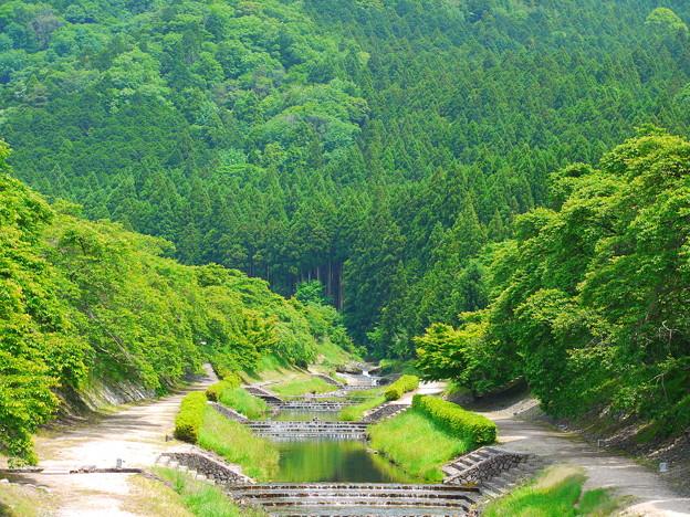 うぐい川の新緑
