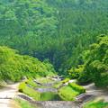 写真: うぐい川の新緑