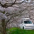 桜の中の愛車