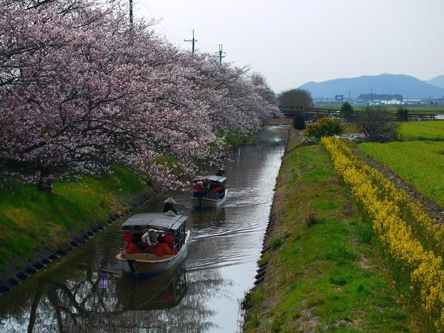 Photos: 水郷めぐり