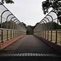 Photos: 近くの梅4