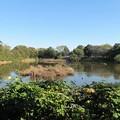 Photos: 沼井公園