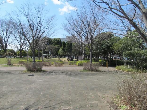 沼辺公園(吉川)