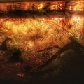 写真: 海老たちの黄昏