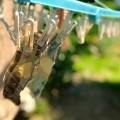 写真: 洗濯日和です