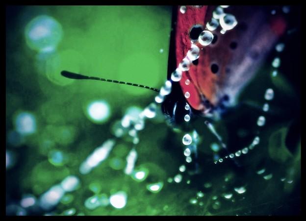 写真: 虫の女