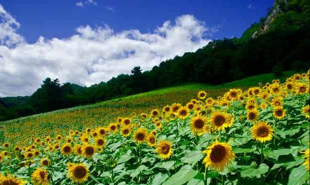写真: 太陽がいっぱい