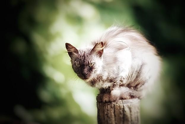 野良猫のように美しく生きたい