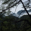 樹間より鋸稜線