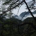 写真: 樹間より鋸稜線