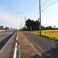 国道259号線沿い加治菜の花