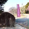 「向山梅林園」入り口石碑