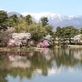 馬見塚公園の桜と残雪の中央アルプス