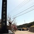 蔵澤寺石碑